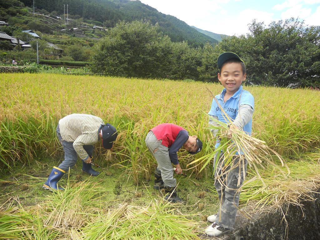 田んぼの学校の稲刈り