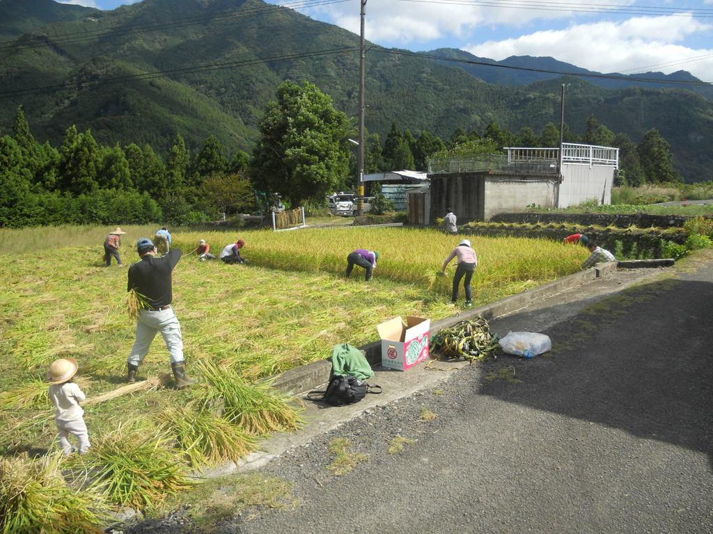 田んぼの学校 稲刈り (4).jpg