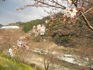 名所 春 (3).jpg
