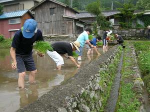 田んぼの学校での田植え